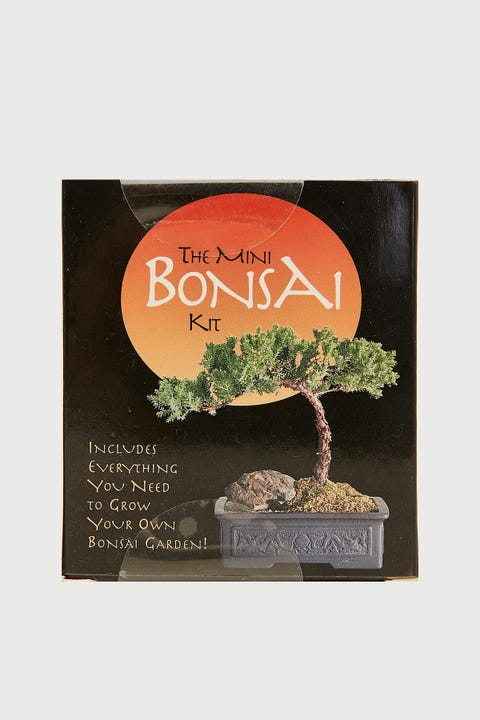 Mini Bonsai Mini Kit